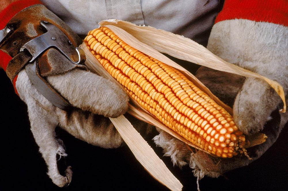 Corn husker, LaGrange, Indiana.