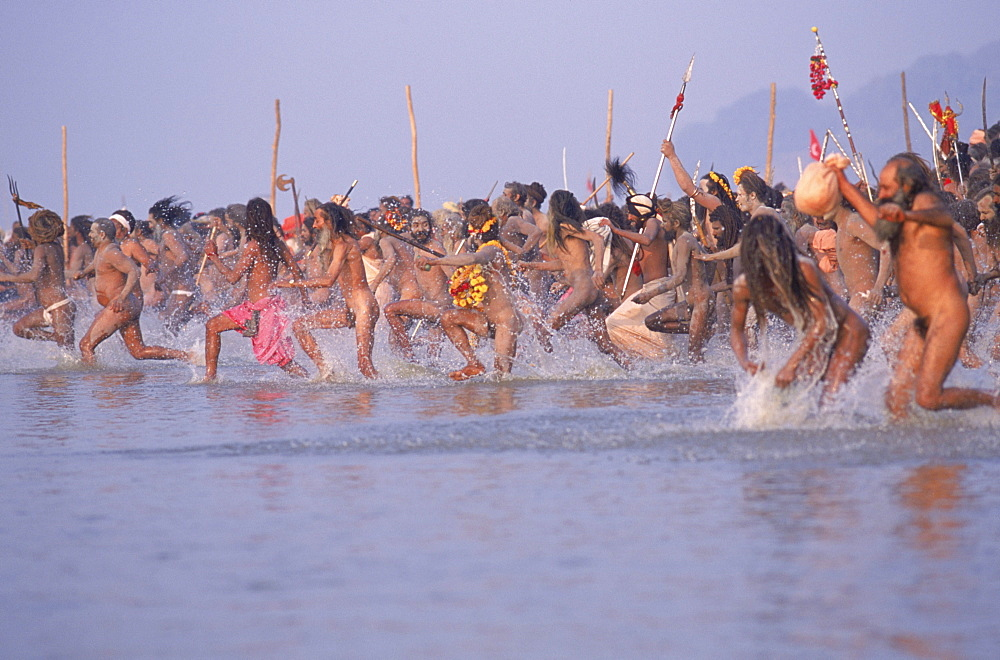 Sadhus enthusiastically running into the the confluence of the Ganges and Yamuna rivers for a purifying bath at the Kumbh Mela festival. Allahabad India - 857-10844