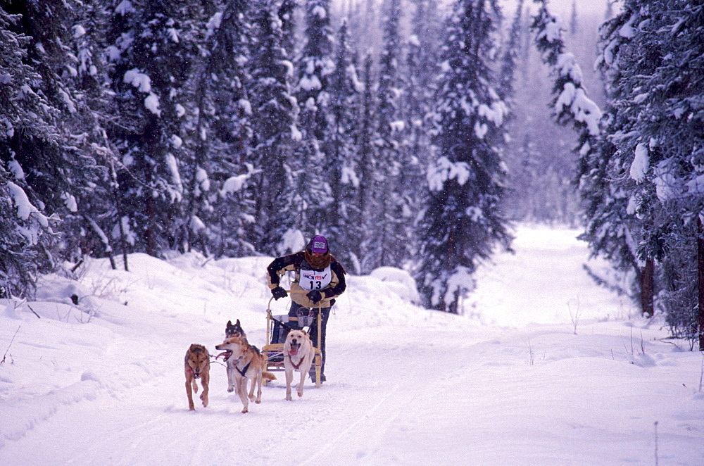 Launa Kohrina competes in the first day of the in the Junior North American, International Federation of Sleddog Sports Junior World Championships in Fairbacks, Alaska. She was in the 4-Dog race, and she is 14-years-old.