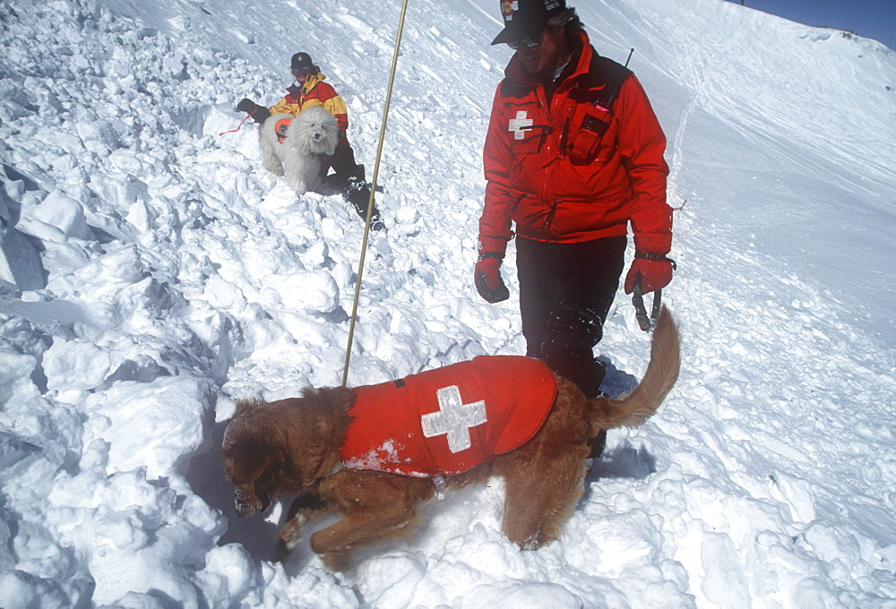 An avalanche rescue dog, trained to sniff out victims buried in avalanches, finds a buried practice victim buried in the snow on the slopes of Snowmass Ski Resort, near Aspen, Colorado - 857-14863