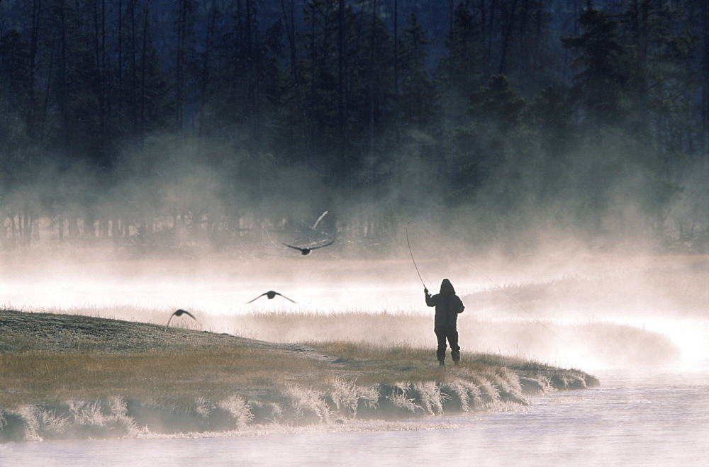 A fly fisherman on the Madison River in Yellowstone National Park.