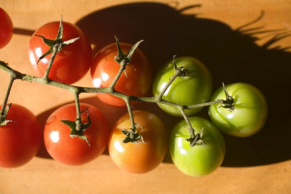 A row of small colorful tomatoes at different stages of ripeness.