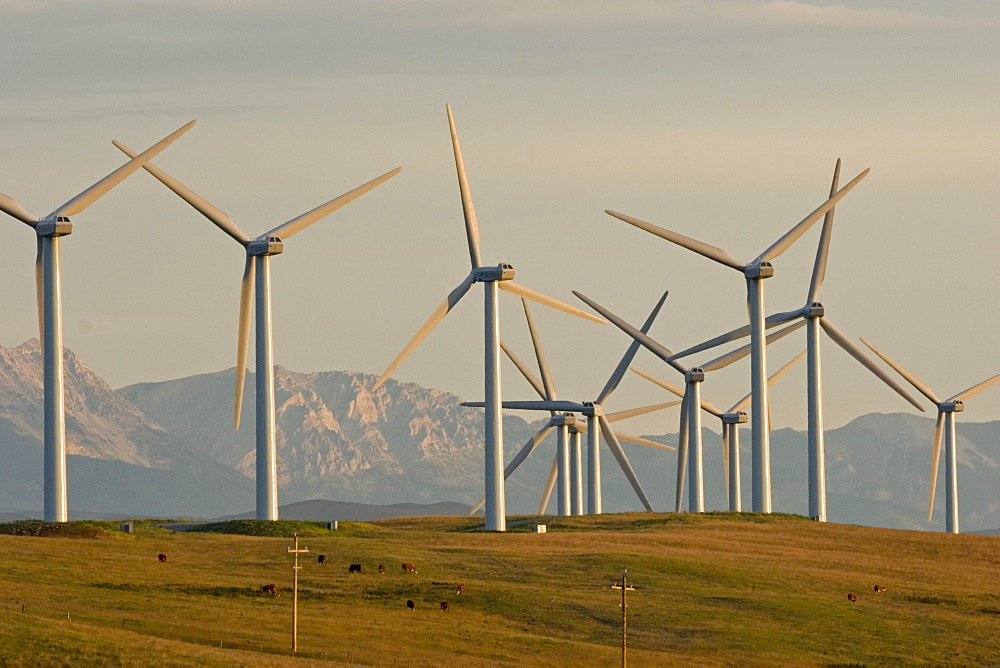 Windmills used to generate electrical power at Cowley Ridge in southern Alberta, Canada.