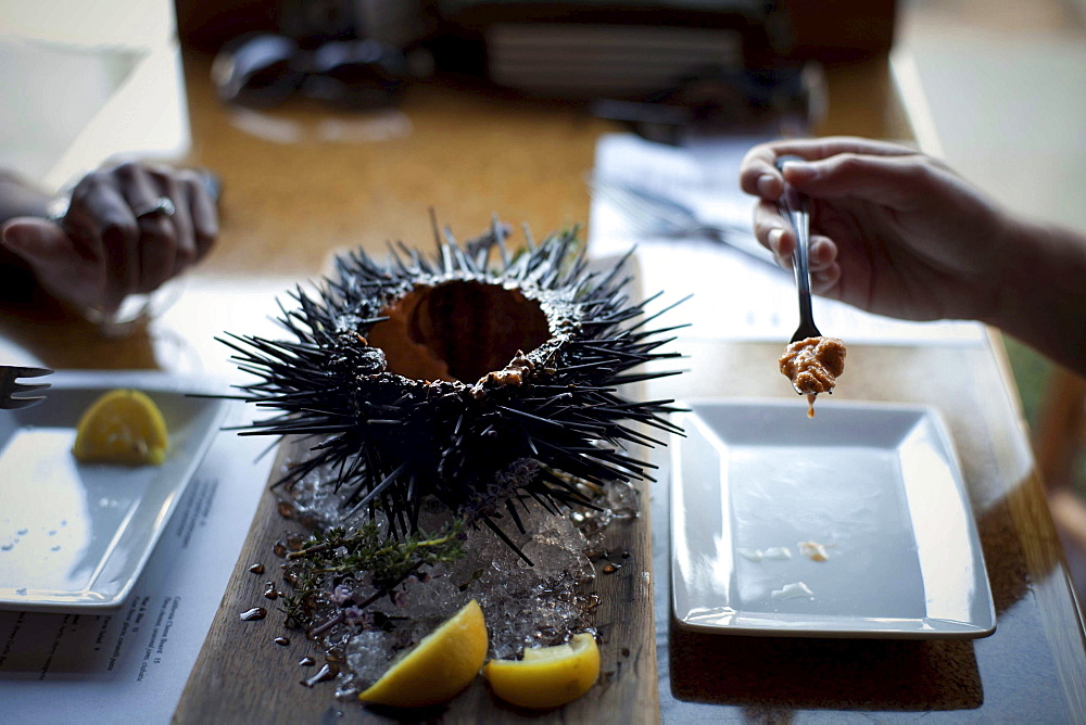 Two friends eat a large shelled sea urchin at the Sea Rocket Bistro restaurant in San Diego,  Ca. The urchin was caught only hours earlier by a San Diego diver,  who personally delivers his catch to various seafood restaurants in the area.