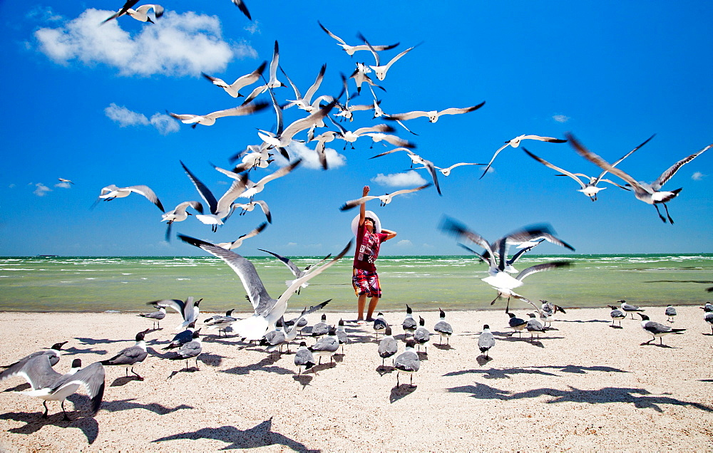 ROCKPORT, TEXAS, USA. A young boy tosses bread into the air for a flock of seagulls on a beach.