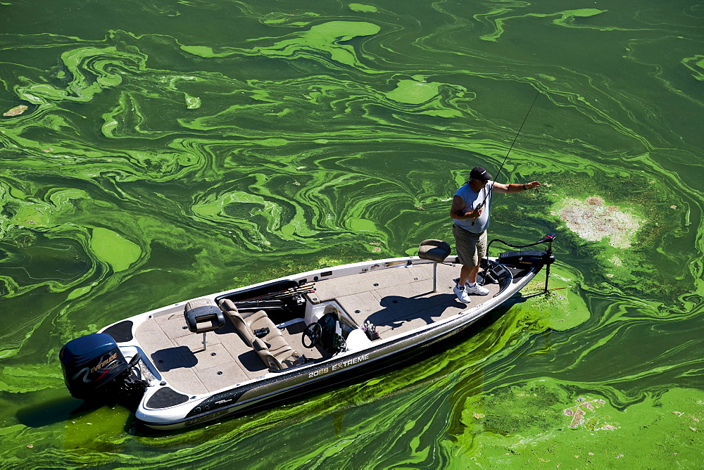 A bass fisherman casts for fish in the Toxic Blue Green Algae in the Copco Reservoir in Northern California.