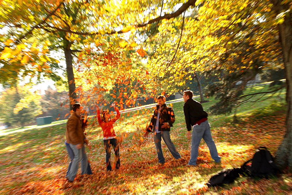 A young group of college students throw a bunch of fall leaves into the air and enjoy themselves in the October weather.