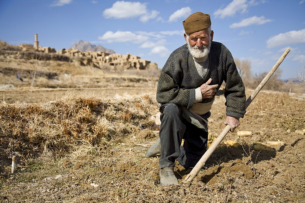 Kharanaq, Iran - February, 2008: Senior man  harvesting a crop of carrots outside the historical ancient city of Kharanaq which lies in a dramatic valley where rugged mountains, desert and farmland  all come together.