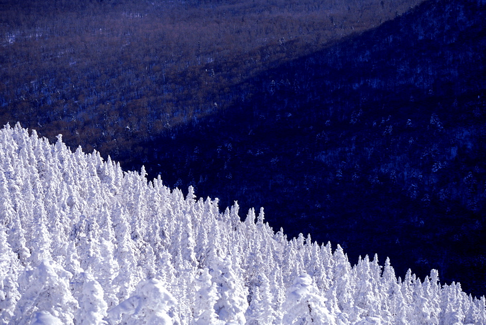 Snow covered trees on Jay Peak in Jay, VT.