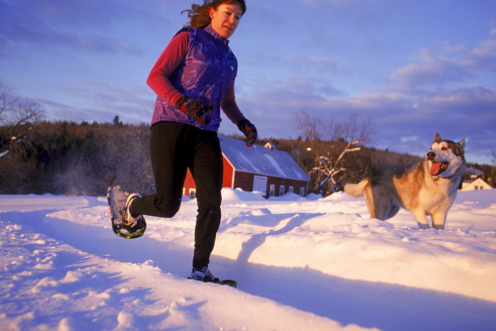 Meril Cray and her dog Mako play in the first light of day during a jog near Cray's home in Middlesex VT. Cray, an avid jogger during the summer is one of the many people across the country who have taken on the sport of snowshoe running.