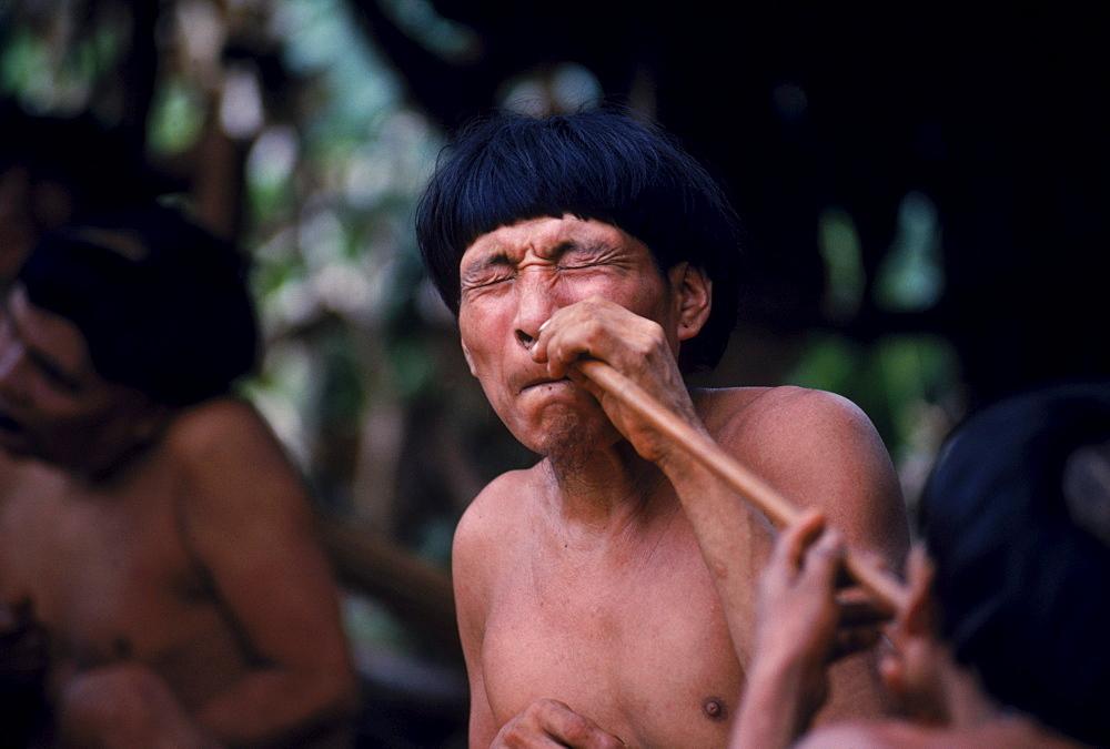 Yanomami Indian shaman snorts epene, a hallucinogenic powder. In the Amazonian Forest in southern Venezuela.