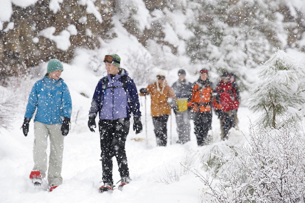 Front view of a medium sized group of adults walking on a trail in the snow in Bend, Oregon.