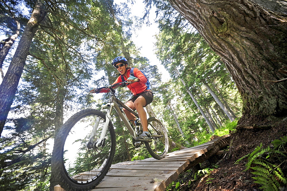 Mountain biker rides the Blueberry Pancake Trail at Alyeska Resort in Girdwood, Alaska June 2011.