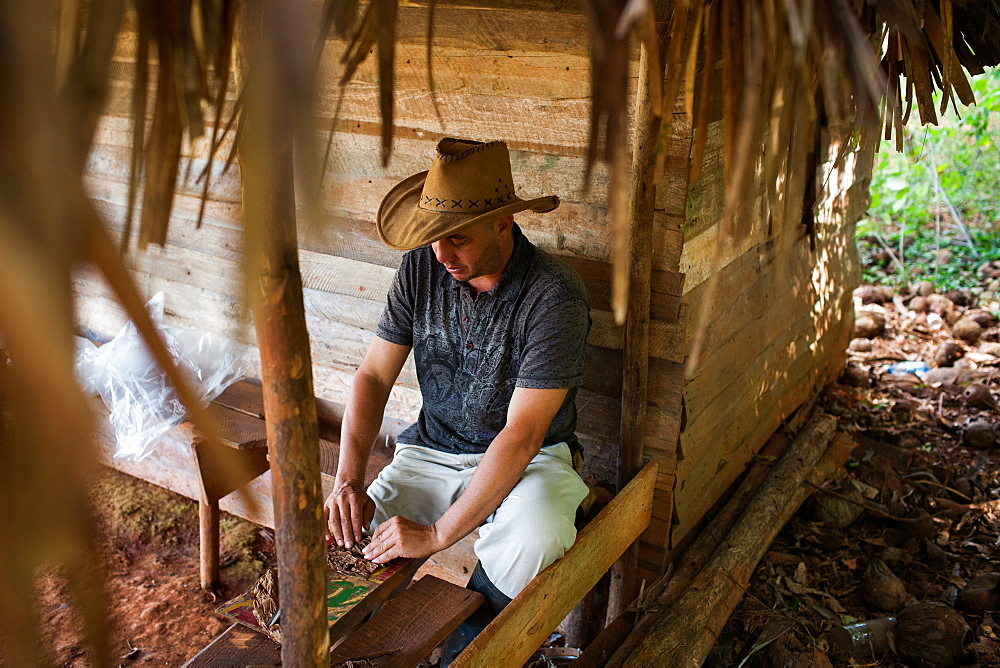 A man in the Viñales valley in Cuba rolls dried tobacco leaves into cigars under a thatch-roof hut.