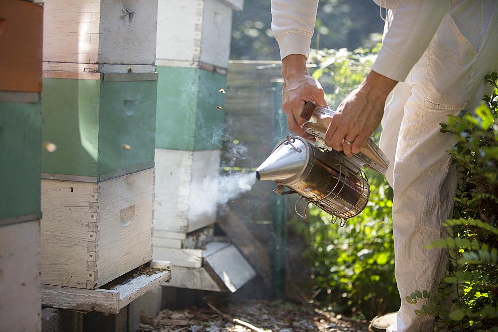 Man in beekeeping suit smoking beehives, Huntingdon Valley, Pennsylvania, United States