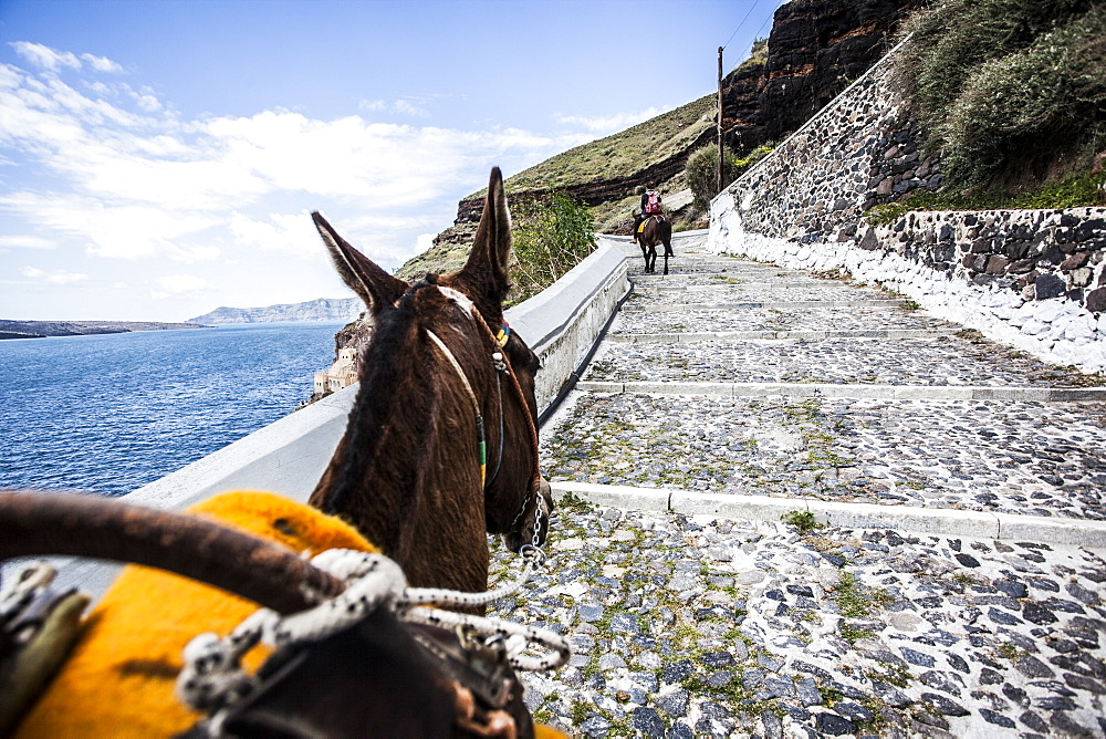 Donkey walking up steps on a hillside in Santorini, Greece. - 857-87697