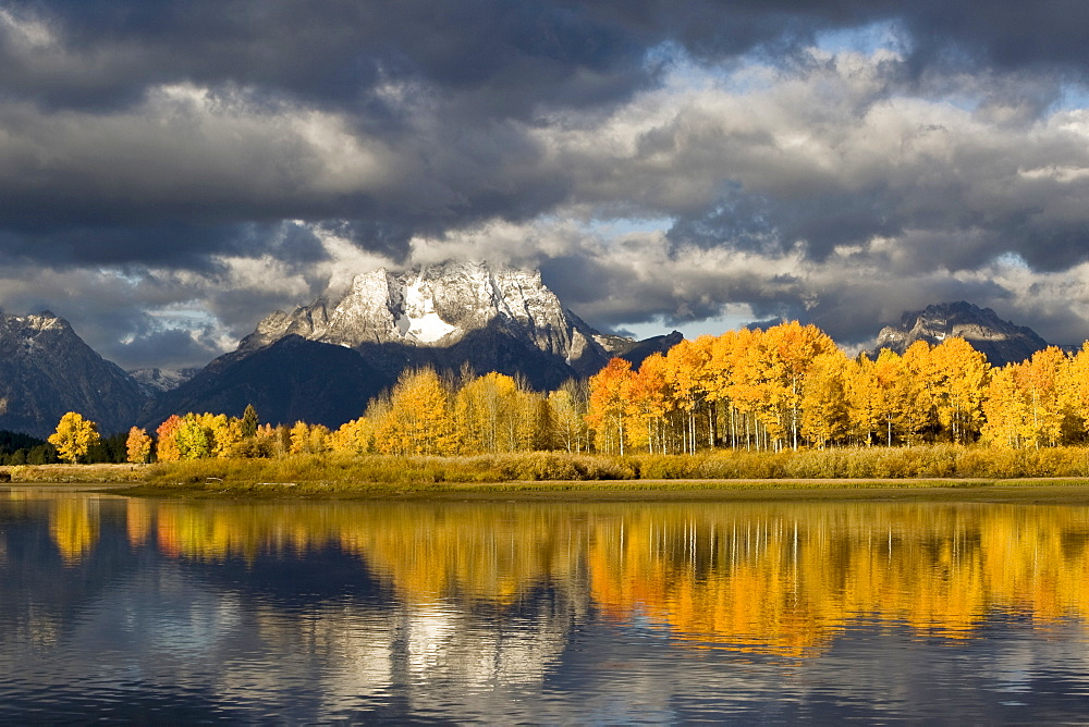 Aspens hang on to their last colors as winter's chill forms over Mt. Moran in Grand Teton National Park, Wyoming.