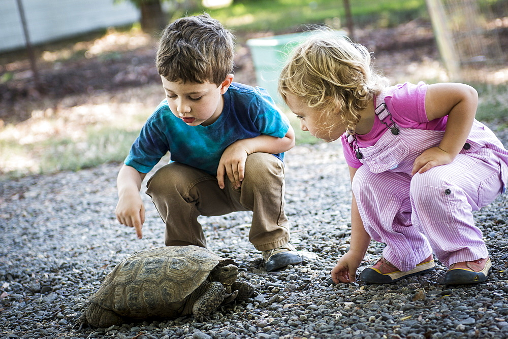 Toddler boy and girl observe pet tortoise on local farm in Chico, California.