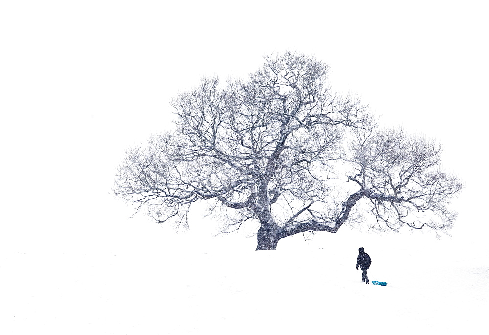 Lone Man pulling sledge under tree in heavy snowfall - 857-89438