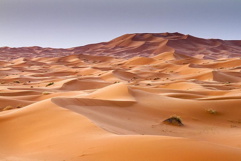 Red sand dunes in Erg Chebbi, Sahara desert. Merzouga, Morocco