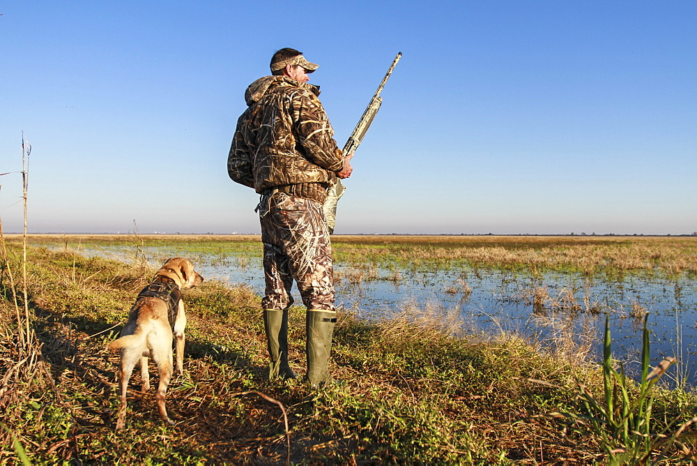 A duck hunter stands with his hunting dog and shotgun.
