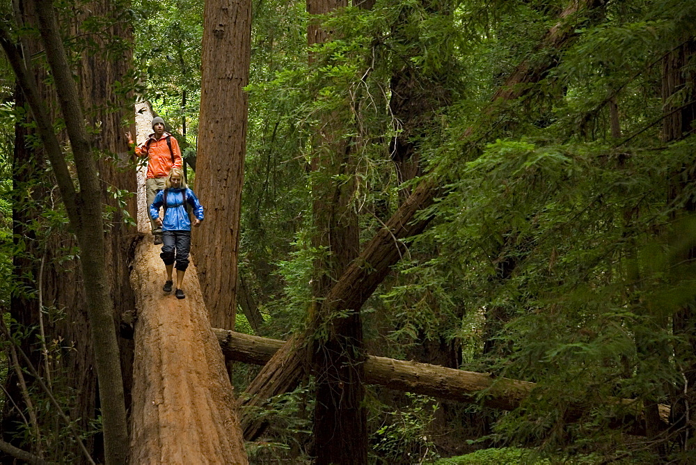 Couple hiking in the redwood forests of Big Sur. Photo by Thomas Kranzle, United States of America