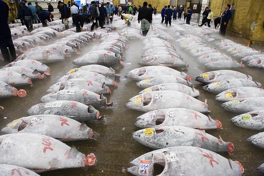 Tsukiji Fish Market, rows of fresh frozen tuna, people in background, Tokyo, Japan, Japan