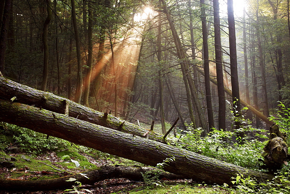 The sun setting in the woods along the Appalachian Trail.