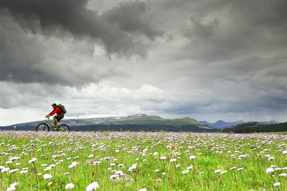 A man riding his mountain bike across a field of purple flowers on a stormy day.