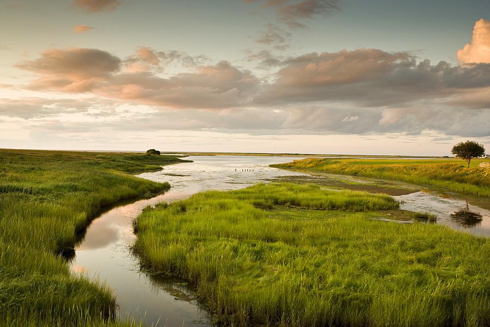 Summer marshland at sunset