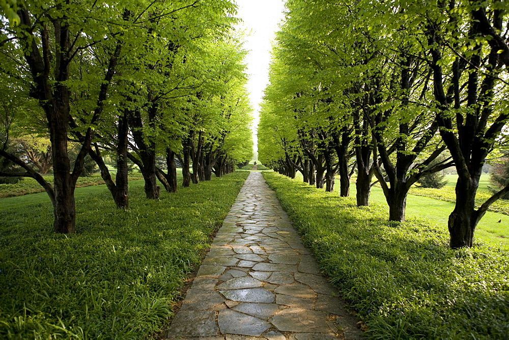 Tree lined garden path