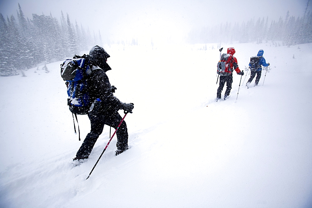Three people skiing/skinning in a snowstorm in Glacier National Park, Montana.