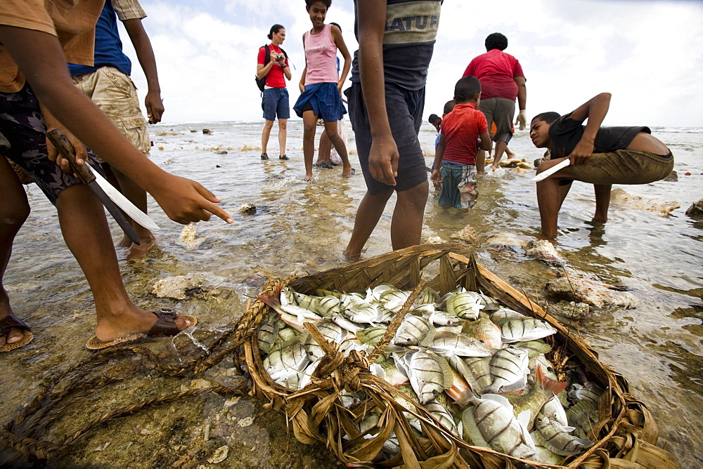 A basket holds the harvest of a large fish harvest during low tide.