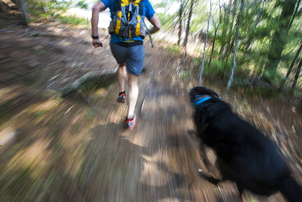 A fast pace run through the woods