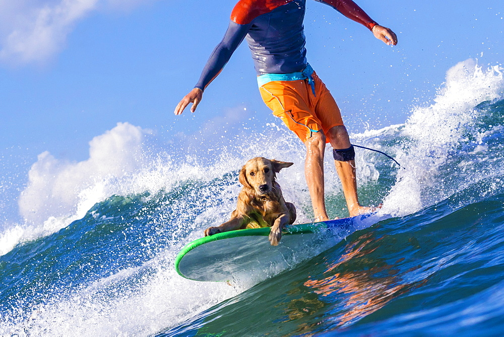 Surfer with a dog on the surfboard. - 857-92517
