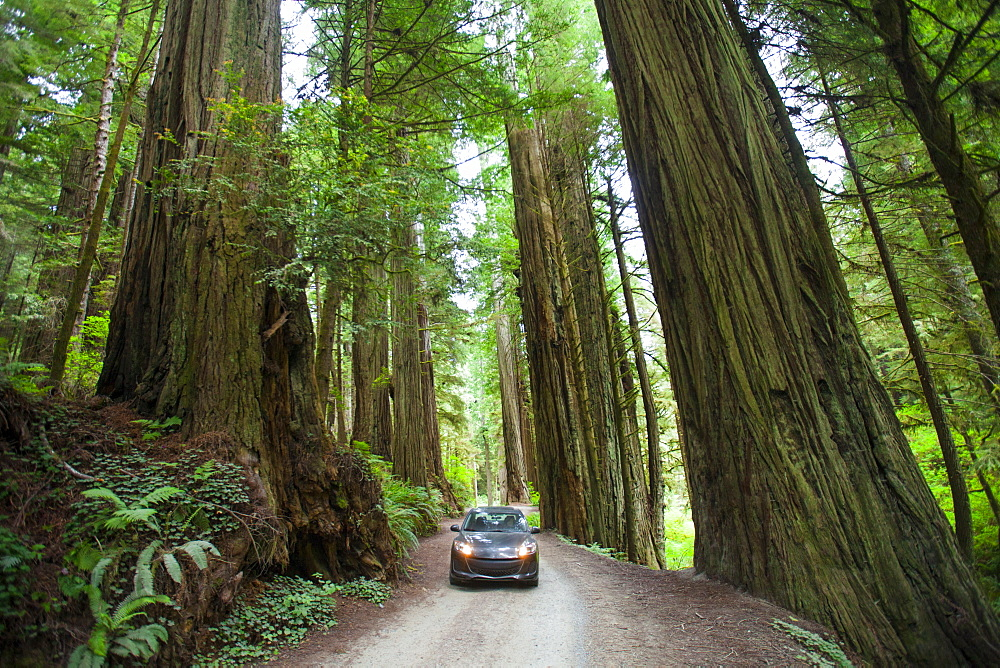 A car driving on Howland Hill Road towards Stout Grove in Jedediah Smith Redwoods State Park, California.
