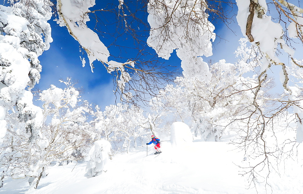 A male skier is riding in deep powder snow. The trees are covered with a white layer and the sky is blue. Fairy tale landscape. Hokkaido, the north island of Japan, is geographically ideally located in the path of consistent weather systems that bring the cold air across the Sea of Japan from Siberia. This results in many of the resorts being absolutely dumped with powder that is renowned for being incredibly dry. Some of the Hokkaido ski resorts receive an amazing average of 14-18 metres of snowfall annually.