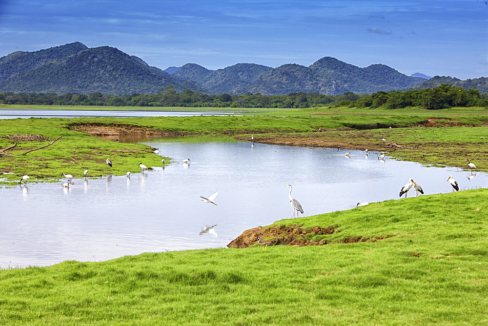 Yala National Park, Sri Lanka - 857-92756