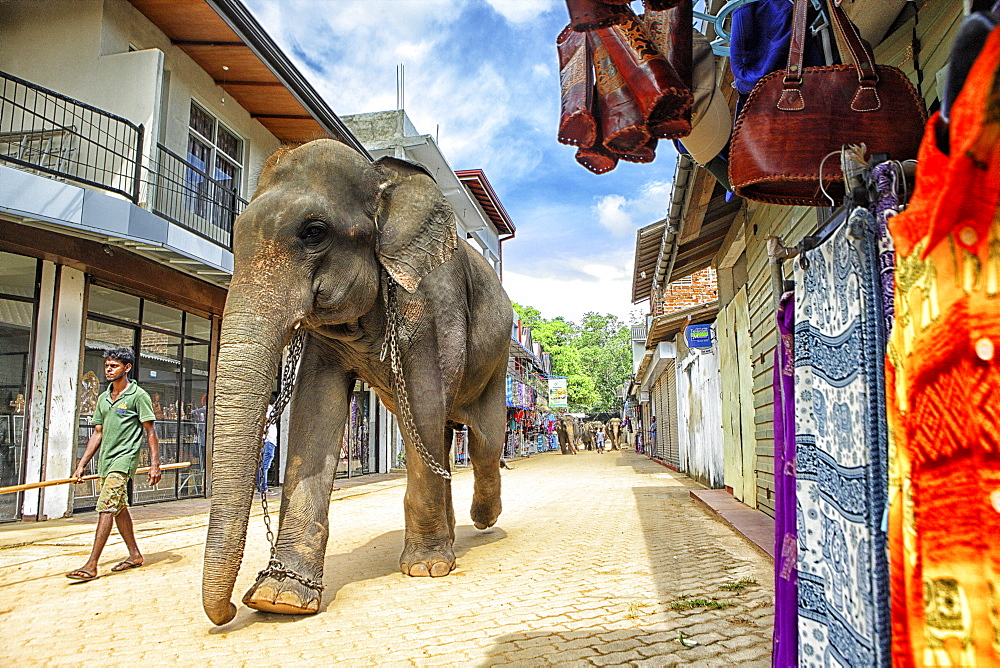 tourists looking at elephant bath, Pinnawela Elephant Orphanage for wild Asian elephants