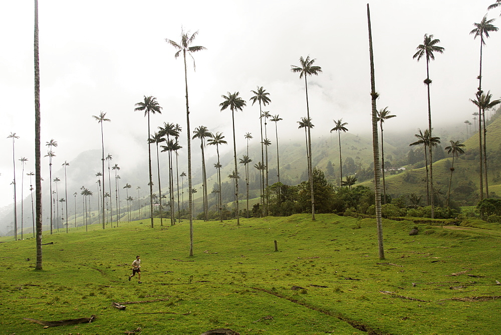 Beneath the tall palm trees that look otherworldly in the Valle Cocora in the central highlands of Colombia.
