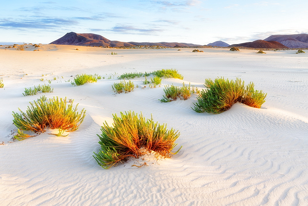Spain, Canary Islands, Fuerteventura, Dunes of corralejo - 857-93033