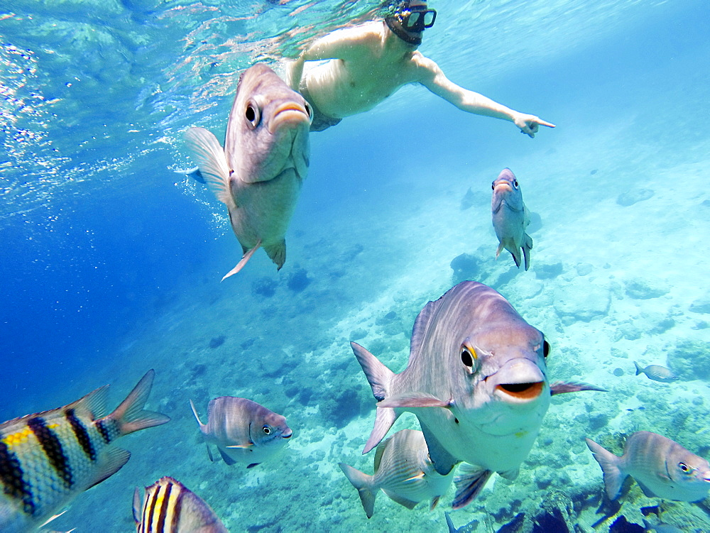Man snorkeling with fish, smiling and looking at the camera