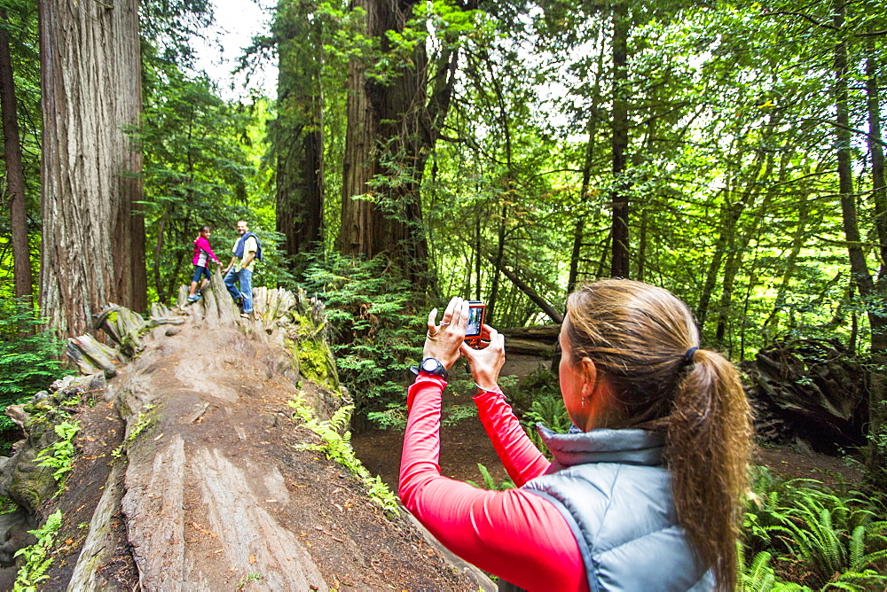 A Woman Taking Picture Of Two People In Redwood National Park, California, Usa