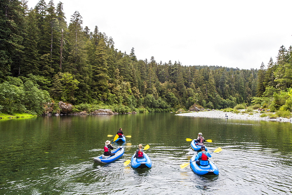 A Group Of Kayakers Kayaking On Smith River In Redwoods National Park