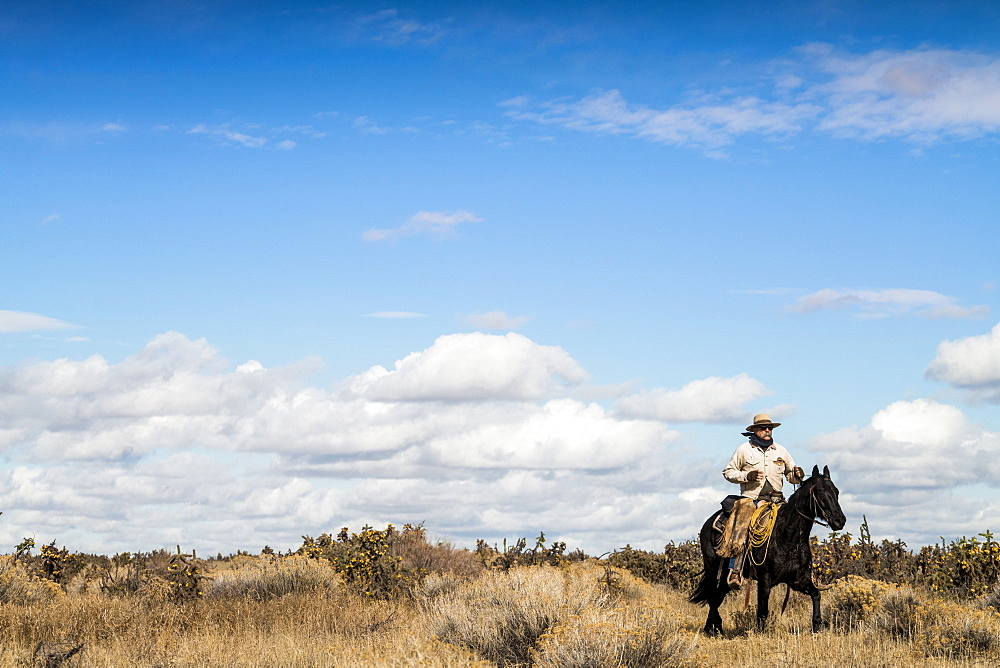 Cowboy Riding Horse Among The Cactus Field In Colorado