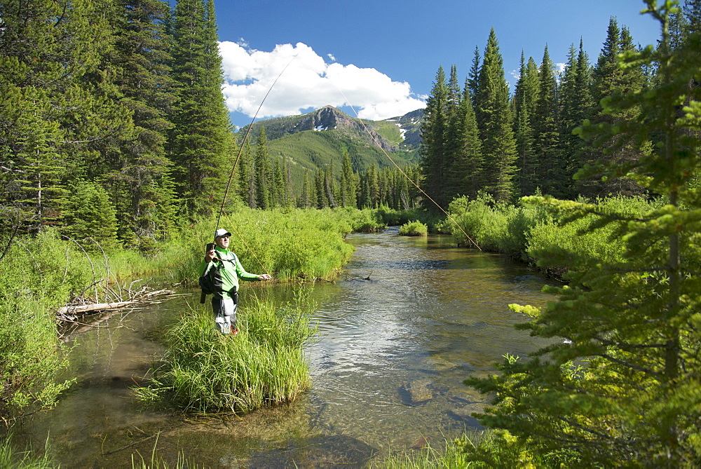 Fly Fisherman On A Small Stream In The Great Bear Wilderness, Montana
