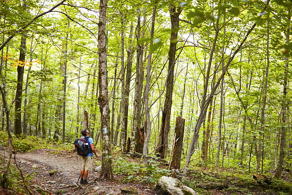A Man Looking At Trees While Hiking Along The Appalachian Trail