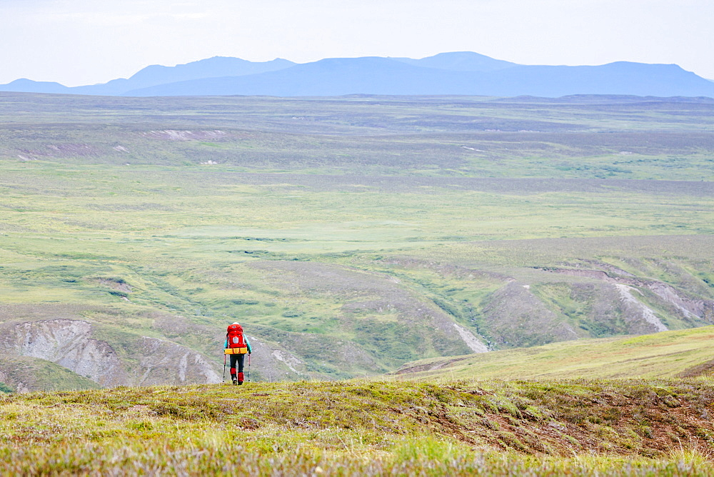 A Woman Is Hiking In The Delta Mountains, Alaska Range, Alaska, Usa