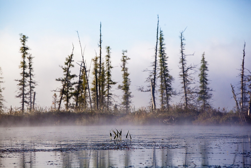 Morning Fog And Trees On The Edge Of Spencer Pond In Northern Maine