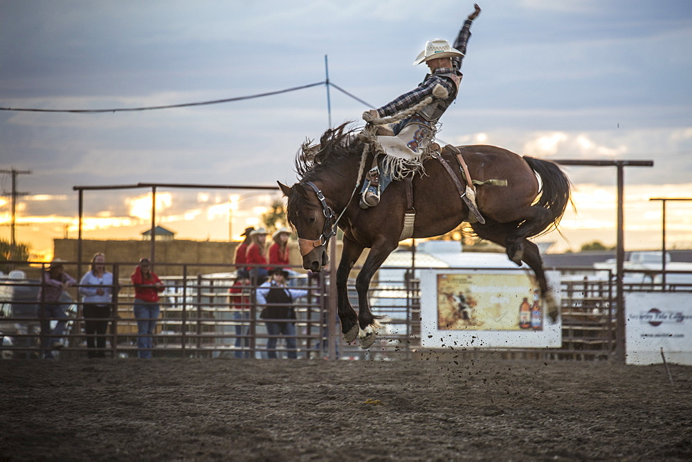 Bucking horse airborne with cowboy after sunset at a Montana summer rodeo